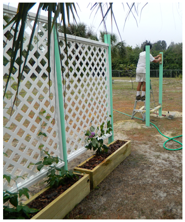 Buy or make a very large trellis grown vines veggies for How to build a lattice screen fence